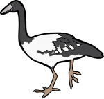 Magpie Goose freehand drawings