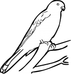 Nankeen Kestrel freehand drawings