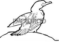 Neotropic CormorantFreehand Image