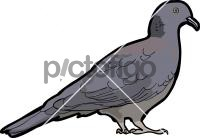 Nilgiri Wood PigeonFreehand Image