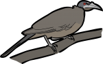 Noisy Friarbird freehand drawings