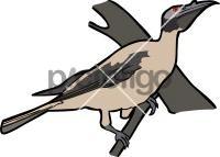 Noisy FriarbirdFreehand Image