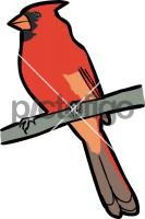 Northern CardinalFreehand Image