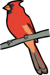 Northern Cardinal freehand drawings