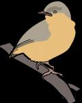 Northern Crombec