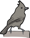 Oak Titmouse freehand drawings