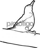 Okinawa WoodpeckerFreehand Image