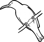 Olive backed  Sunbird freehand drawings