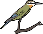 Olive Bee Eater freehand drawings