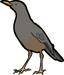 Olive Thrush freehand drawings
