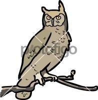 OwlFreehand Image