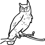Owl freehand drawings