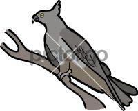 Pacific BazaFreehand Image