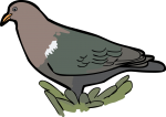 Pacific Emerald Dove freehand drawings