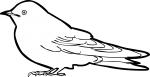 Pacific Swallow freehand drawings