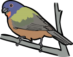 Painted Bunting freehand drawings