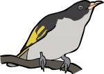 Painted Honeyeater freehand drawings