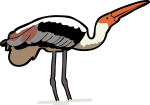 Painted Stork freehand drawings