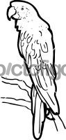 ParrotFreehand Image