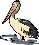 Pelican freehand drawings