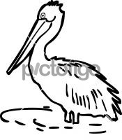 PelicanFreehand Image