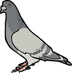 Pigeon freehand drawings