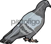 PigeonFreehand Image