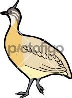 Quebracho Crested TinamouFreehand Image
