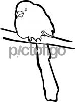 Racket Tailed TreepieFreehand Image