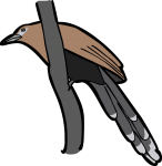 Raffless Malkoha freehand drawings