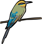 Rainbow Bee Eater freehand drawings
