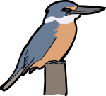 Sacred Kingfisher freehand drawings
