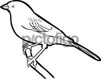 Sage SparrowFreehand Image