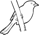 Santa Marta Brush Finch freehand drawings