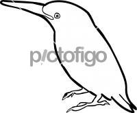Sao Tome KingfisherFreehand Image