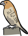 Scaly Breasted Munia freehand drawings