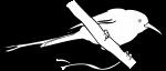 Tacazze Sunbird freehand drawings