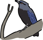 Taiwan Whistling Thrush freehand drawings