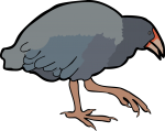 Takahe freehand drawings