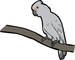 Tanimbar Corella freehand drawings