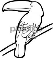 Toco ToucanFreehand Image
