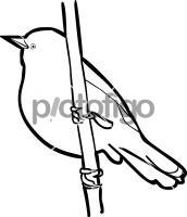 Unicolored BlackbirdFreehand Image