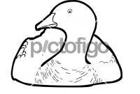 Upland GooseFreehand Image
