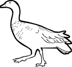 Upland Goose freehand drawings