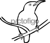 Van Hasselts Sunbird