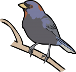 Varied Bunting freehand drawings