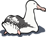 Wandering Albatross freehand drawings