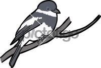Wards Flycatcher