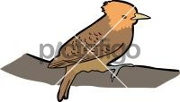 Waved WoodpeckerFreehand Image