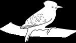 Waved Woodpecker freehand drawings